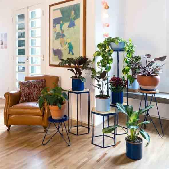 Onde colocar plantas dentro de casa 001