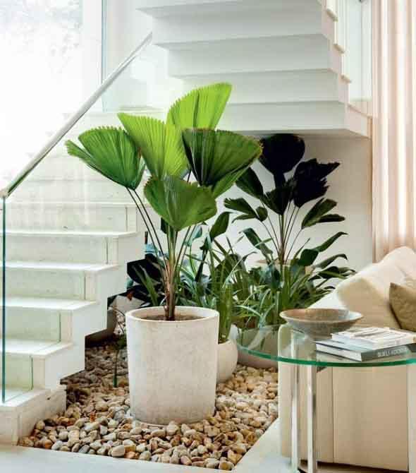 Onde colocar plantas dentro de casa 002