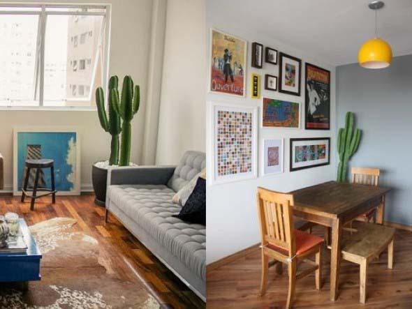 Onde colocar plantas dentro de casa 004