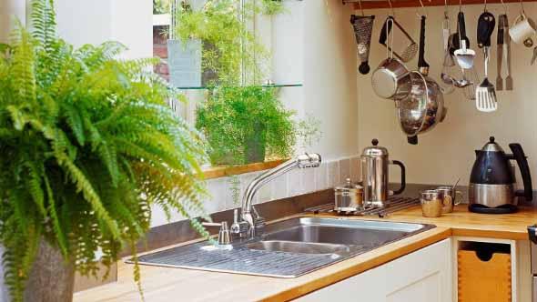 Onde colocar plantas dentro de casa 006