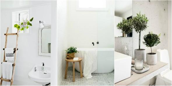 Onde colocar plantas dentro de casa 012