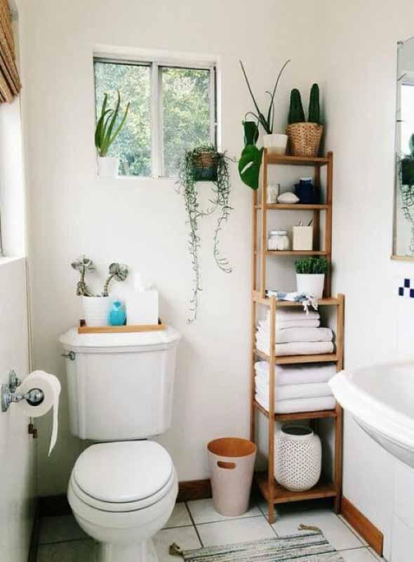 Onde colocar plantas dentro de casa 013