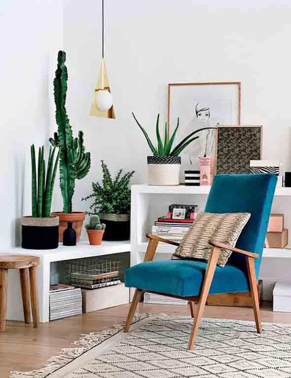 Onde colocar plantas dentro de casa 020