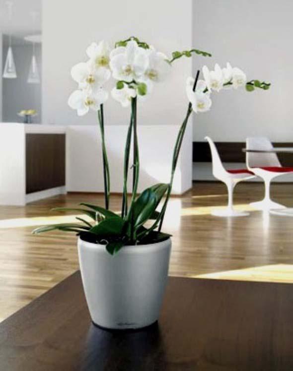 Vasinhos de flores e plantas para enfeitar a casa 005