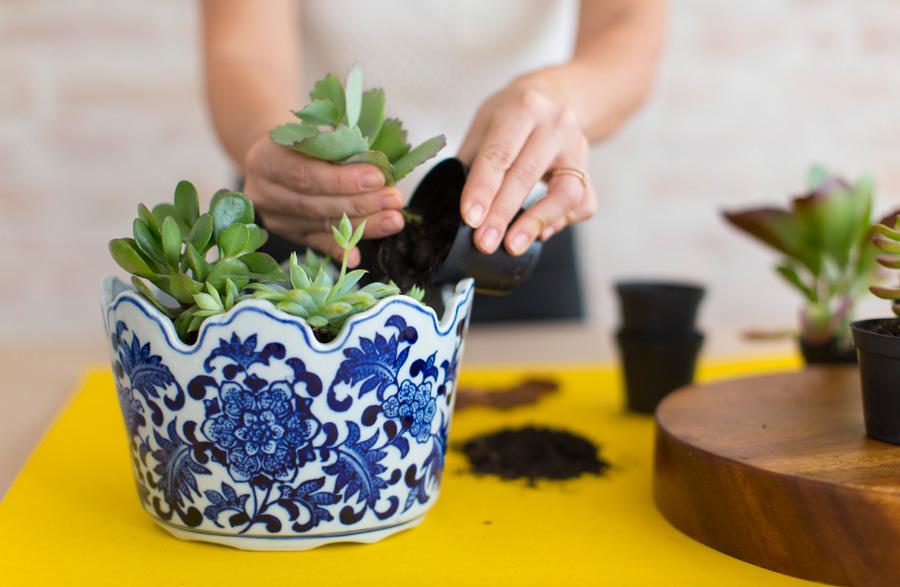 plantas na cozinha 11