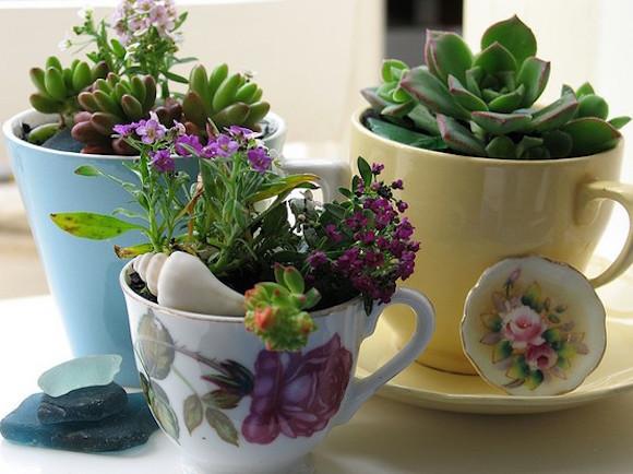 plantas na cozinha 6