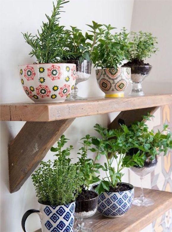 plantas na cozinha 7