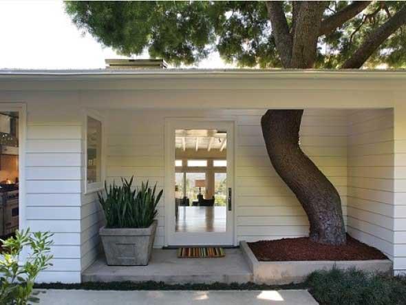 Árvore dentro de casa 007