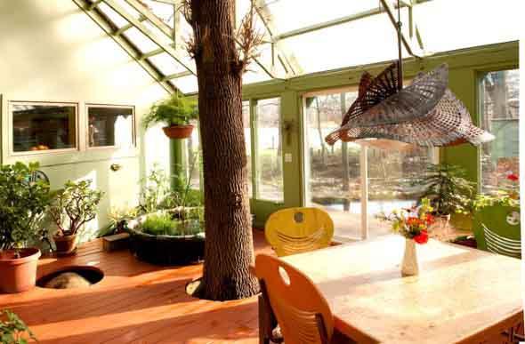 Árvore dentro de casa 012