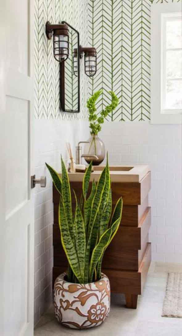Dicas para ter plantas no banheiro 001