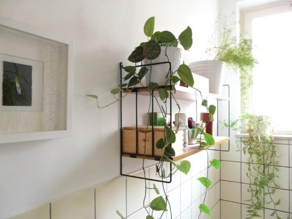 Dicas para ter plantas no banheiro 012