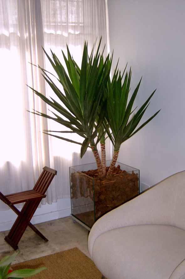 Vasos de plantas quadrados na decoração 007