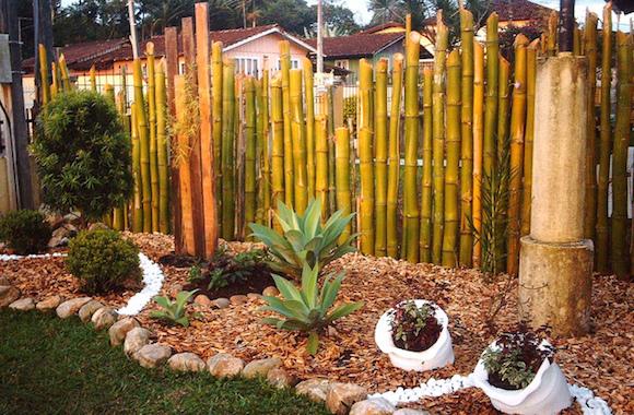 bambu 6