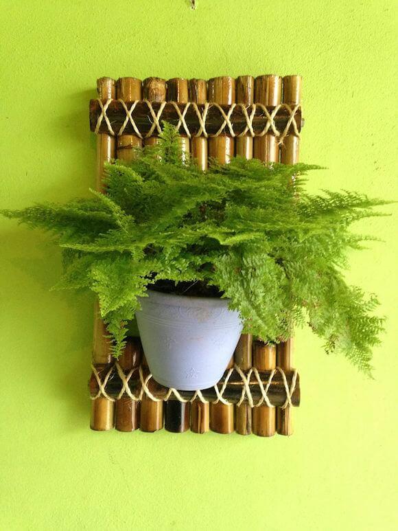 bambu 8